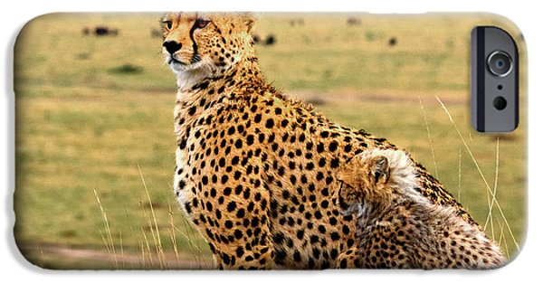 Cheetahs IPhone 6s Case by Babak Tafreshi