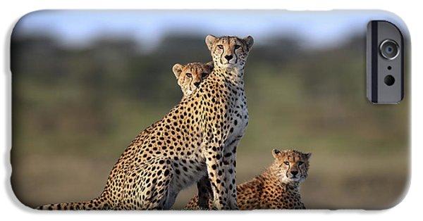 Cheetah iPhone 6s Case - Cheetahs Family by Sultan Sultan Al