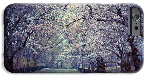 Cherry Blossoms - Spring - Central Park IPhone Case by Vivienne Gucwa
