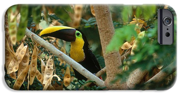 Chestnut-mandibled Toucan IPhone 6s Case by Art Wolfe