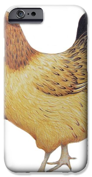 Rooster iPhone 6s Case - Chicken by Ele Grafton