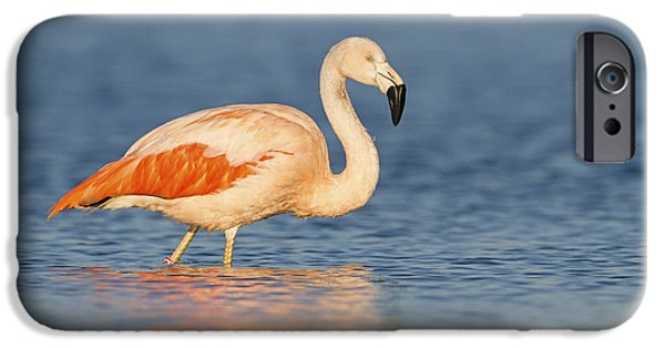 Chilean Flamingo IPhone 6s Case