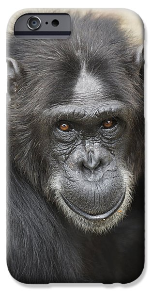 Chimpanzee Portrait Ol Pejeta IPhone 6s Case