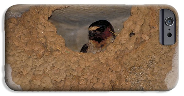 Cliff Swallows IPhone 6s Case by Paul J. Fusco