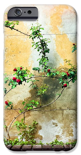 IPhone 6s Case featuring the photograph Climbing Rose Plant by Silvia Ganora