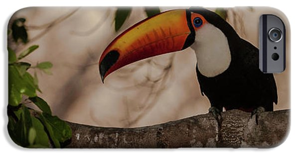 Close-up Of Tocu Toucan Ramphastos Toco IPhone 6s Case by Panoramic Images