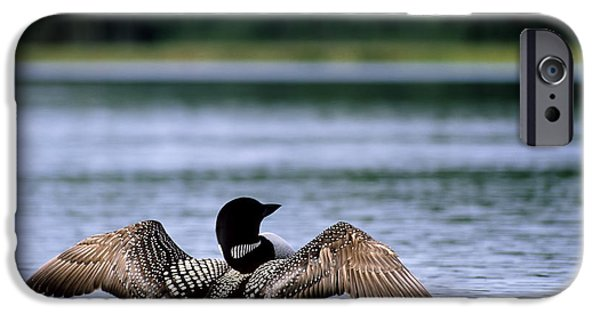 Common Loon IPhone 6s Case by Mark Newman