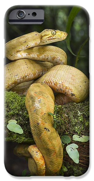 Common Tree Boa -yellow Morph IPhone 6s Case