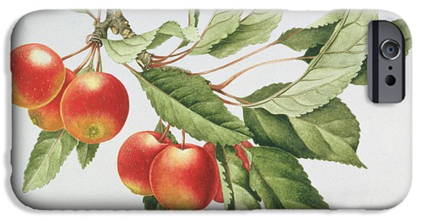 Crab Apples IPhone 6s Case by Sally Crosthwaite