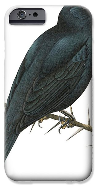 Cuckoo Shrike IPhone 6s Case by Anonymous