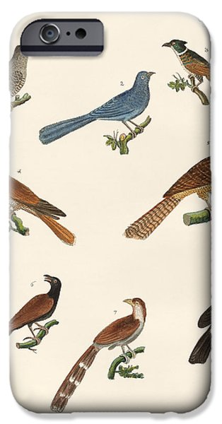 Cuckoos From Various Countries IPhone 6s Case by Splendid Art Prints