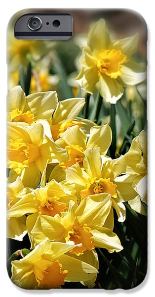 Daffodil IPhone 6s Case by Bill Wakeley