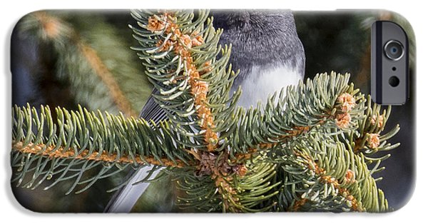 Dark-eyed Junco  IPhone 6s Case by Ricky L Jones