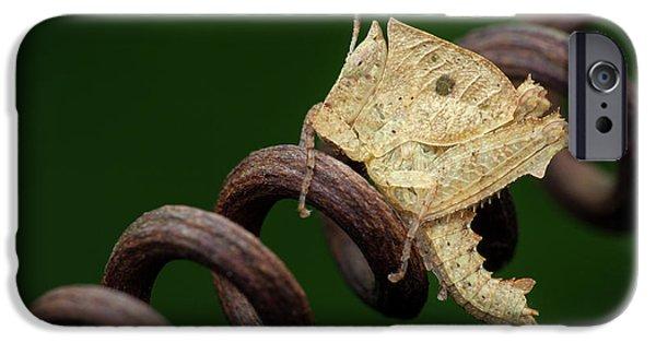 Grasshopper iPhone 6s Case - Dead Leaf Grasshopper Nymph by Melvyn Yeo