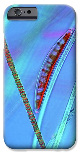 Diatom On Cyanobacteria IPhone Case by Marek Mis