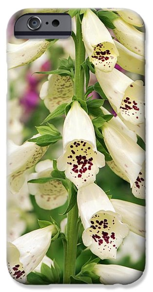 Digitalis Purpurea 'dalmatian Cream' IPhone Case by Adrian Thomas
