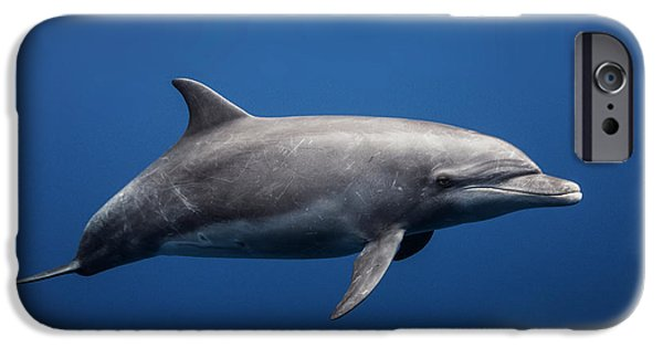 Dolphin iPhone 6s Case - Dolphin by Barathieu Gabriel