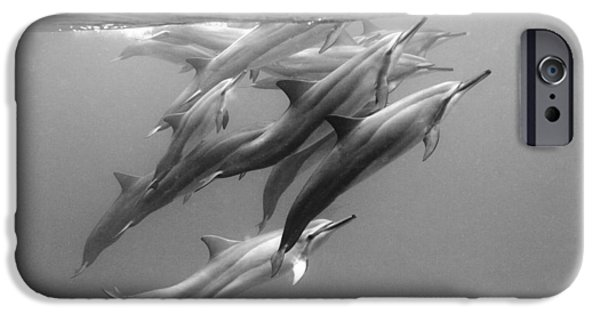 Dolphin iPhone 6s Case - Dolphin Pod by Sean Davey