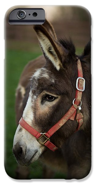 Donkey IPhone 6s Case by Shane Holsclaw