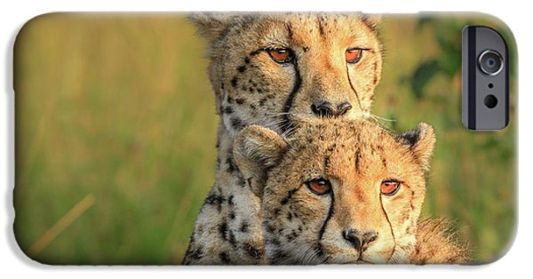 Cheetah iPhone 6s Case - Double Team by Jaco Marx