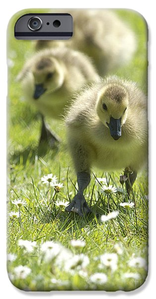 Gosling iPhone 6s Case - Easter Chicks by Sharon Talson