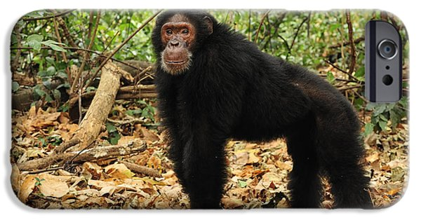 Eastern Chimpanzee Gombe Stream Np IPhone 6s Case by Thomas Marent