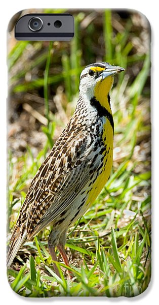 Eastern Meadowlark IPhone 6s Case