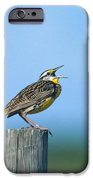 Eastern Meadowlark IPhone 6s Case by Paul J. Fusco