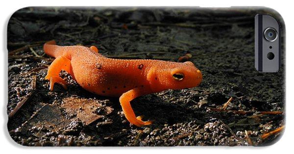 Eastern Newt Red Eft IPhone 6s Case