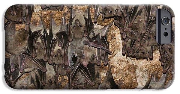 Egyptian Fruit Bat Rousettus Aegyptiacus IPhone 6s Case by Photostock-israel