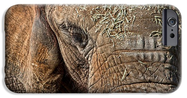 Elephant Never Forgets IPhone 6s Case by Miroslava Jurcik