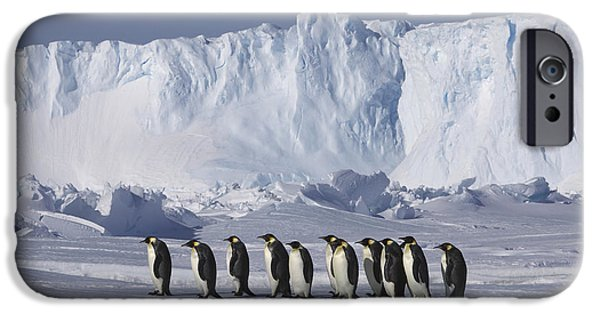 Emperor Penguins Walking Antarctica IPhone 6s Case by Frederique Olivier
