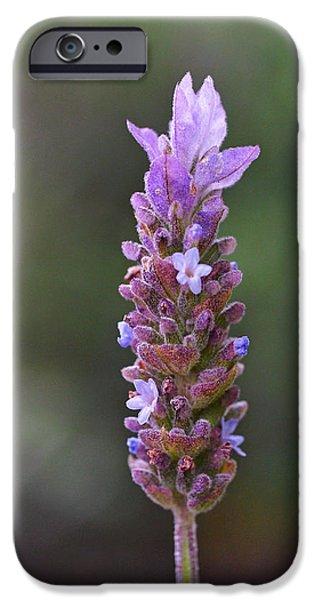 English Lavender IPhone 6s Case