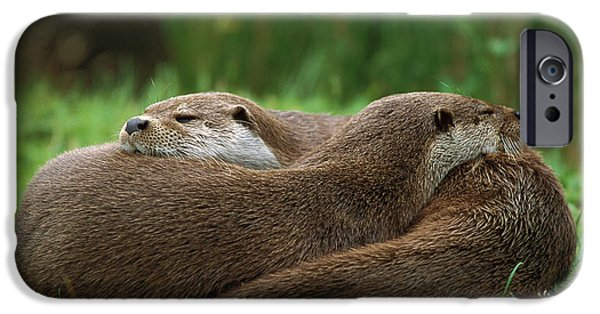 European River Otter Lutra Lutra IPhone 6s Case by Ingo Arndt