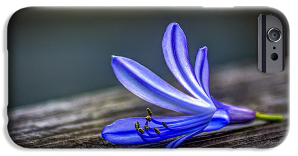 Lily iPhone 6s Case - Fallen Beauty by Marvin Spates