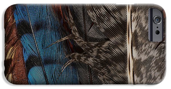 Bluejay iPhone 6s Case - Feather Collection by Susan Capuano