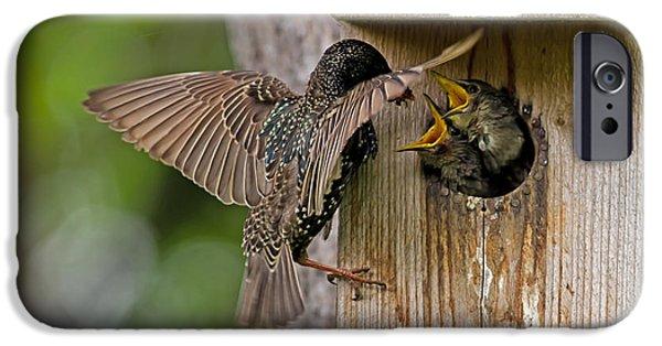 Feeding Starlings IPhone 6s Case by Torbjorn Swenelius