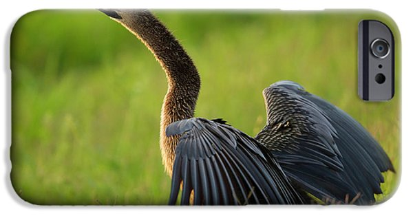 Anhinga iPhone 6s Case - Female Anhinga Drying Out Wings by Maresa Pryor