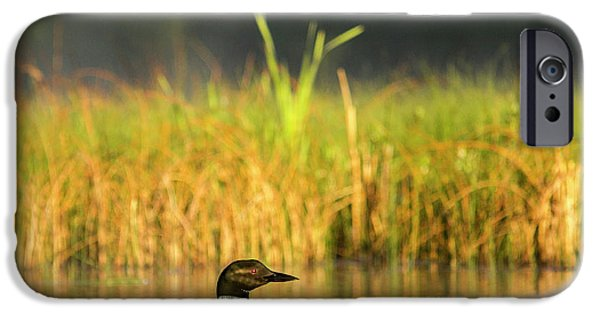 Female Common Loon With Newborn Chick IPhone 6s Case