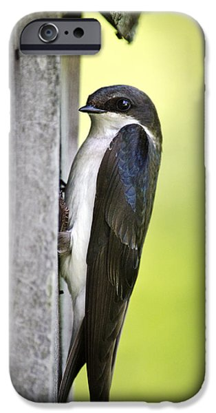 Tree Swallow On Nestbox IPhone 6s Case by Christina Rollo