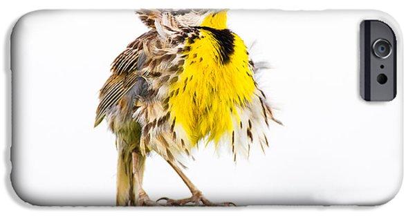 Flluffy Meadowlark IPhone 6s Case by Bill Swindaman