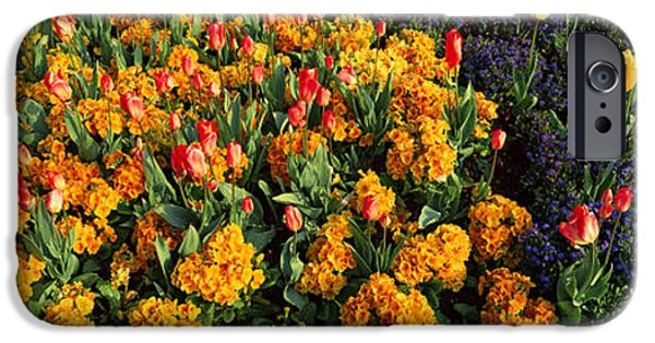 Flowers In Hyde Park, City IPhone 6s Case