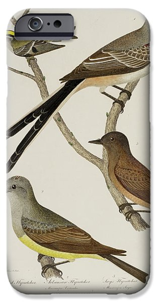 Flycatcher And Wren IPhone 6s Case by British Library