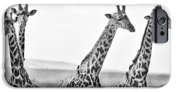 Four Giraffes IPhone 6s Case