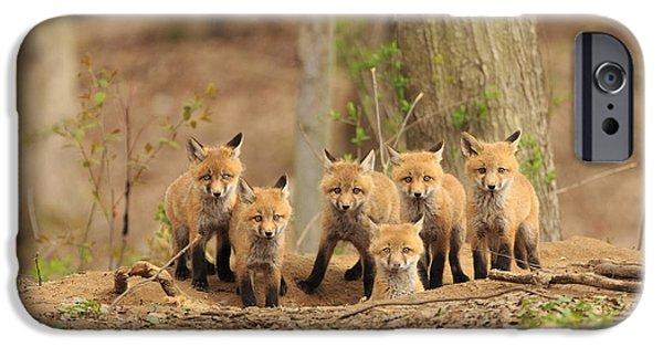 Phoenix iPhone 6s Case - Fox Family Portrait by Everet Regal