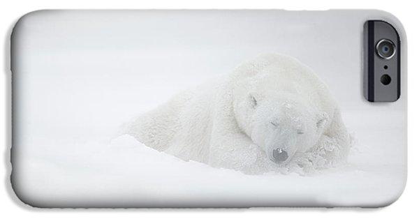 Polar Bear iPhone 6s Case - Frozen Dreams by Marco Pozzi