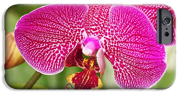 Fuchsia Moth Orchid IPhone 6s Case