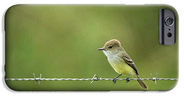 Galapagos Flycatcher (myiarchus IPhone 6s Case