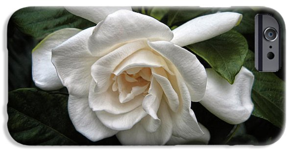 Gardenia IPhone 6s Case
