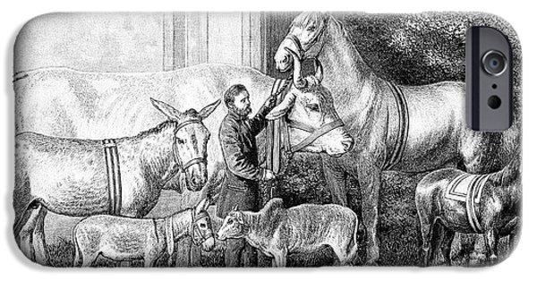Gigantism And Dwarfism In Farm Animals IPhone 6s Case by Bildagentur-online/tschanz